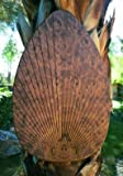 Palm Leaf-Shaped Ceiling Fan Blade Covers (Burl) (15