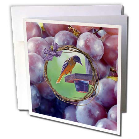 3dRose Beverly Turner Bird Photography - Baltimore Oriole at Feeder, Twig and Grape Frame with Bow, Purple - 1 Greeting Card with Envelope ()