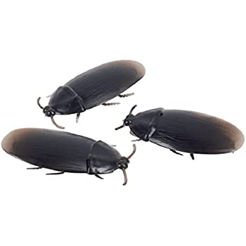 Loftus 12- Fake Roaches Prank Novelty Cockroach