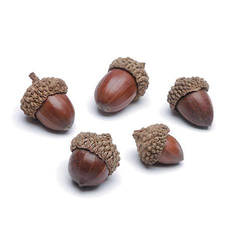Darice Autumn Fall Decor - Bag of Small Faux Acorns 4oz/120g