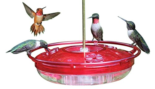Coles Wild Bird Products Hummer