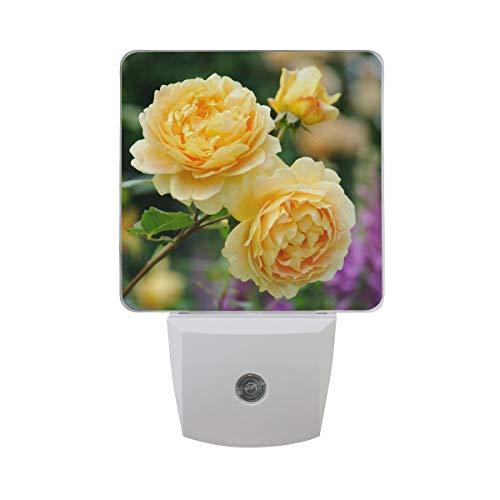 LED Night Light with Smart Dusk to Dawn Sensor,David Austin Roses Plug in Night Light Great for Bedroom Bathroom Hallway Stairways Or Any Dark Room