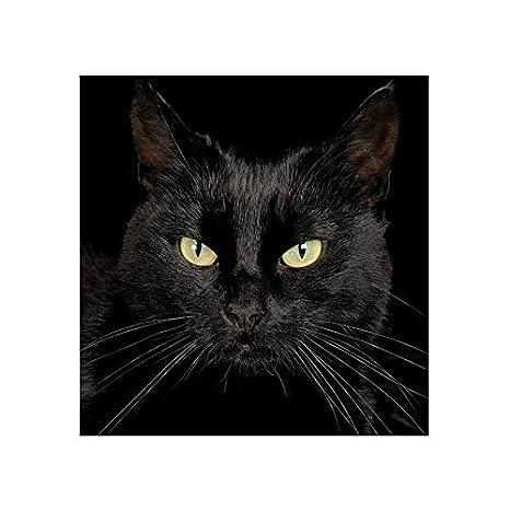 5d mosaico de diamante hermoso sueño casas las partículas de resina de diamante pintura kits de manualidades cuadrado diamante bordado gato: Amazon.es: ...