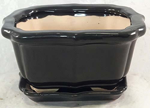 Bonsai Tree Pot black 6 Inch Bonsai Pots with Trays- unique from Jmbamboo by JM BAMBOO