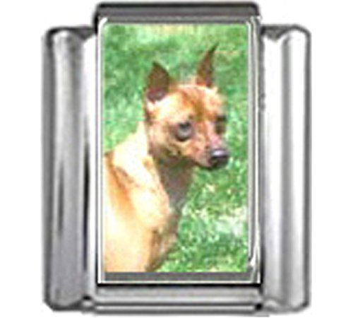 Stylysh Charms Miniature Pinscher Dog Photo Italian 9mm Link DG282