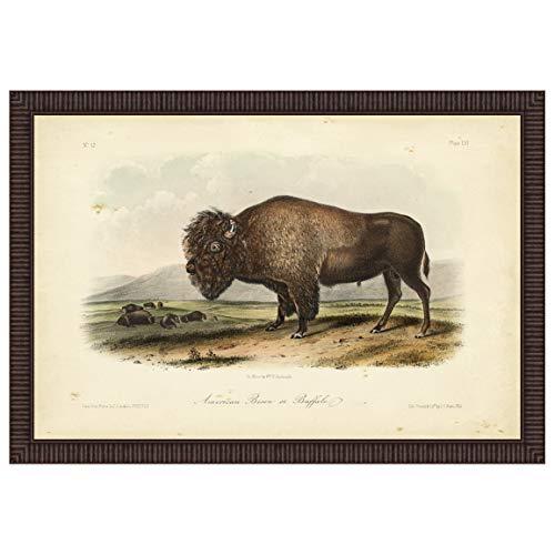 Black Forest Decor American Bison Framed Print