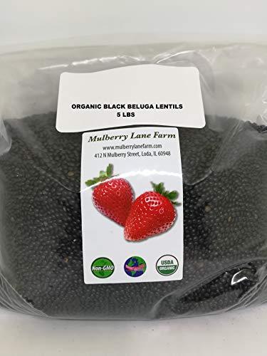 Black Beluga Lentils 5 Pounds Whole USDA Certified Organic,, Non-GMO Bulk