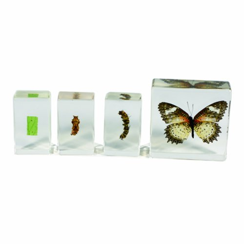 REALBUG Butterfly Lifecycle 4pc Set