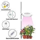 ONERAY Plant Light, LED Growth Full Spectrum Light