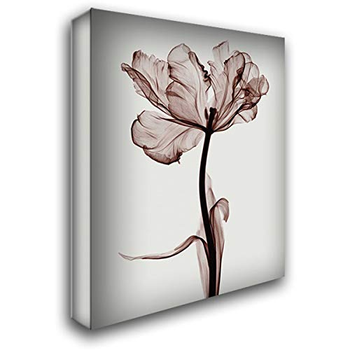 Meyers Parrot Tulips - Parrot Tulip I 28x36 Gallery Wrapped Stretched Canvas Art by Meyers, Steven N.