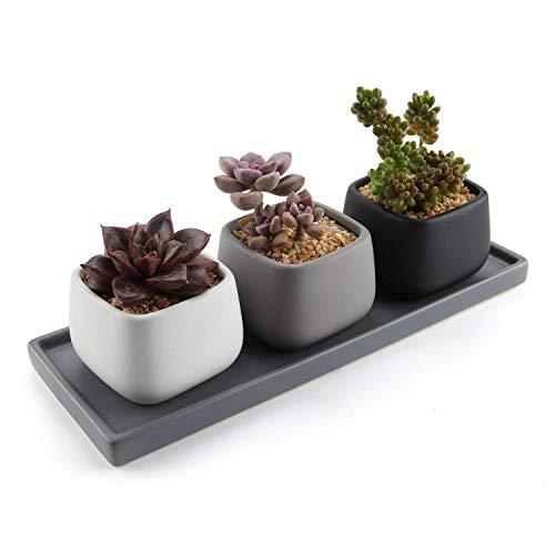 Black Tray Rectangular (T4U 2.75 Inch Ceramic Modern Mini Square Succulent Plant Pot/Cactus Plant Pot Container with Rectangular Tray - Full Color Set of 3)
