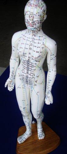 Anatomy Professional Medical Acupuncture ANGELUS