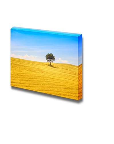 Tuscany Country Landscape Olive Tree and Green Fields Montalcino Italy Europe Wall Decor ation