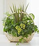 Angel Of Grace - Same Day Sympathy Flowers Delivery - Sympathy Flower - Sympathy Gifts - Send Online Sympathy Plants & Flowers