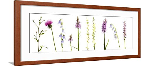 ArtEdge Meadow Flowers, Fleabane Thistle, Bearded Bellfower, Common Spotted Orchid, Twayblade, Austria Wall Art Framed Print, 12x36, Brown Soft White ()