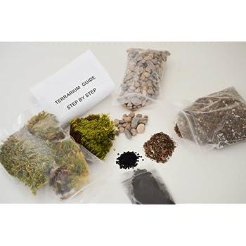 cute farms terrarium starter kit moss. Black Bedroom Furniture Sets. Home Design Ideas