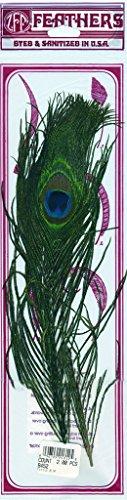 "Peacock Eye Feather Craft Supplies - 8-15"" Natural Wedding Centerpiece Home Decor 2pcs"