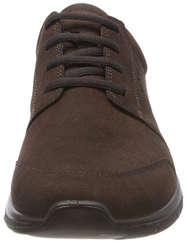 Uomo Marrone 2072 Irving Coffee Sneaker ECCO OYwZfqPO