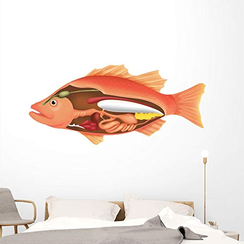 Wallmonkeys Anatomy Fish Wall Decal Peel and Stick Animal Graphics (72 in W x 34 in H) WM29340