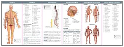 Anatomy Nerves Study Guide - Ultimate User Guide •