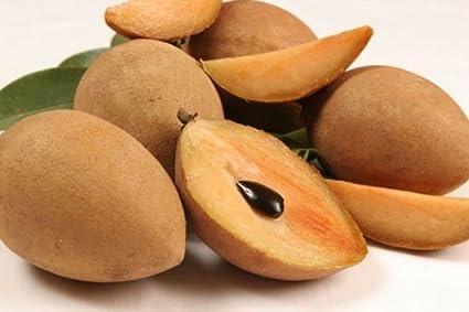 50 seeds manilkara zapota seeds achras sapota chico sapote zapote chicle sapodilla