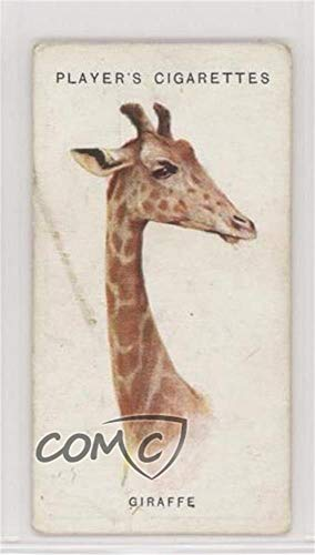 The Giraffe Ungraded COMC Good to VG-EX (Trading Card) 1931 Player's Wild Animals' Heads by Arthur Wardle - [Base] #25 from Unknown