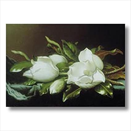 Amazon white magnolia flower floral contemporary wall picture white magnolia flower floral contemporary wall picture 16x20 art print mightylinksfo