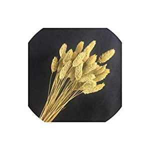 FunnyWoo-store 50Pcs Pine Cone Rabbit Tail Foxtail Wheat Flower Bouquets Ins Wind Home Office Decoration,4 3