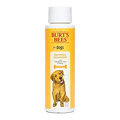 Burts-Bees-All-Natural-Oatmeal-Shampoo-or-Conditioner-for-Dogs-Made-with-Colloidal-Oat-Flour-and-Honey-Moisturizes-Soothes-Softens-Dry-Skin-Naturally-Sulfate-Paraben-Free-Made-in-the-USA