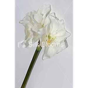 Stem of Two Fresh Touch Cream Amaryllis, Artificial Amaryllis 80