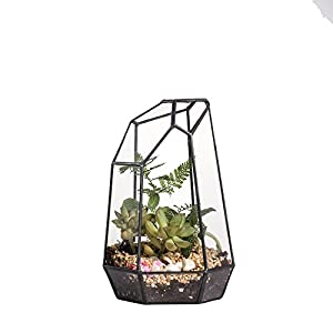 7.4 inches Glass Geometric Succulent Terrarium Balcony Polyhedron Irregular Plant Planter Box Fern Moss Display Flower Pot Indoor Outdoor Decoration Wardian Case Centerpiece for Wedding Coffee Table 103