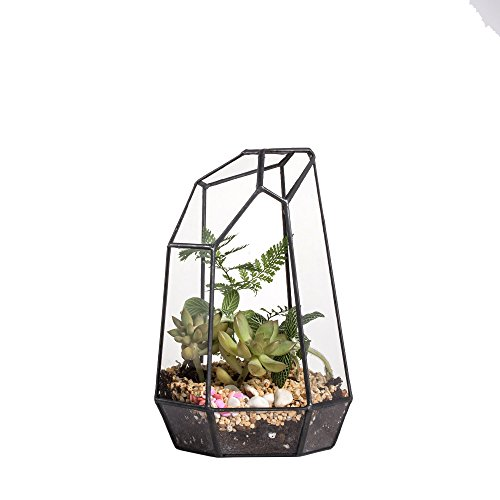 7.4 inches Glass Geometric Succulent Terrarium Balcony Polyhedron Irregular Plant Planter Box Fern Moss Display Flower Pot Indoor Outdoor Decoration Wardian Case Centerpiece for Wedding Coffee Table