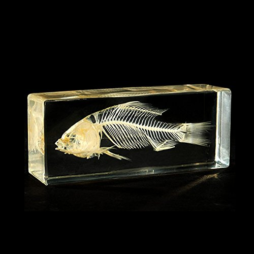 QTMY Biology Science World Collection of Real Insect Specimen Paperweight (Fish -