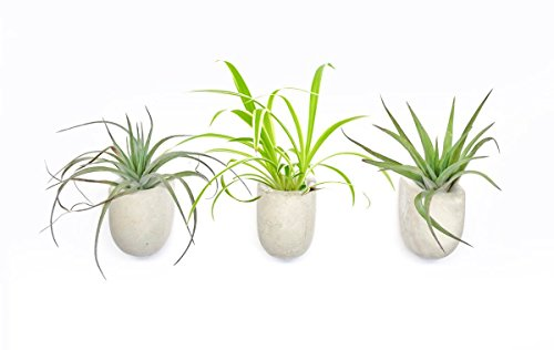 Gift Republic Magnetic Planters