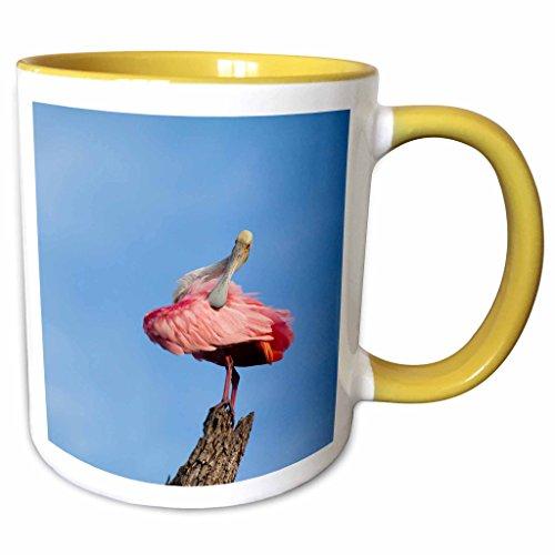 3dRose Danita Delimont - Joanne Wells - Birds - USA, Florida, St. Augustine, Roseate spoonbill at Alligator Farm. - 11oz Two-Tone Yellow Mug - Outlets Florida Augustine St