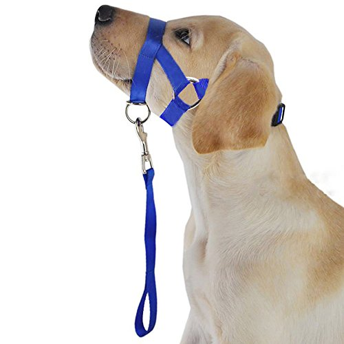 Didog Upgraded Version No Pull Nylon Dog Head collar with a Short Leash - L Size Perfect for Training Controlling