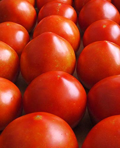 Early Tomato - Early Girl Tomato Seeds (20 Seed Pack)