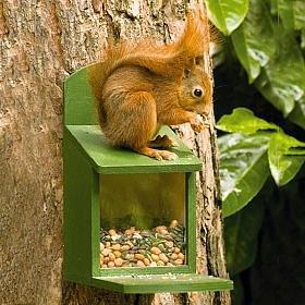 Wooden Squirrel feeder CJ Wildlife