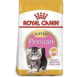 Royal Canin Alimento seco para gatos adultos para gatitos persas de raza felina, 3 libras