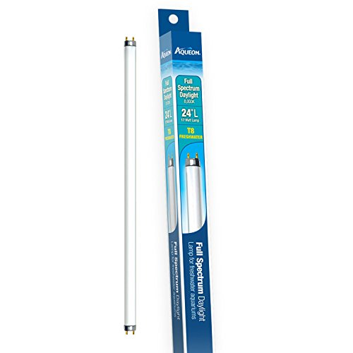 Aqueon 65354 Full-Spectrum Daylight T8 Fluorescent Lamp 17-Watt, 24-Inch