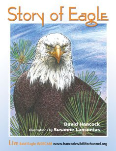 Story of Eagle Activity & Coloring (Illustrated Bald Eagle)