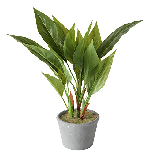 Realistic Tropical House Plant in a Pot, True to Life Spathiphyllum, Stems and Leaves, Green Growers Pot, Faux Silk, Dirt Covered with Moss, Over 1 Ft Tall (13 3/4 Inches) ()