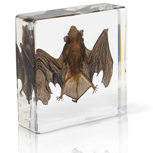 Bat Specimen- Real Bat Specimen, Encased Animal Specimen for Science Classrooms or Gifts, by American Heritage Industries (Bat Globe)