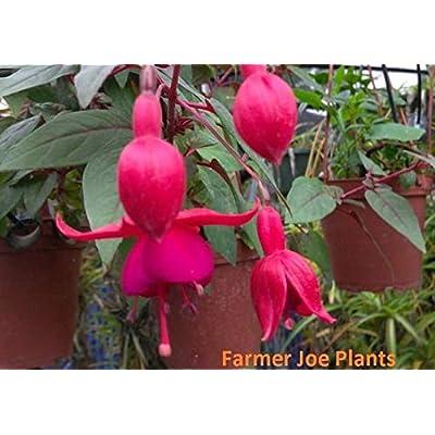 AchmadAnam - Live - Fuchsia - MARINKA Plugs 4 Liners/Plugs. E10 : Garden & Outdoor