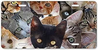 Yaoqin88 Kitty Collage - Aluminum License Plate, Front License Plate, Personality Vanity Tag 6