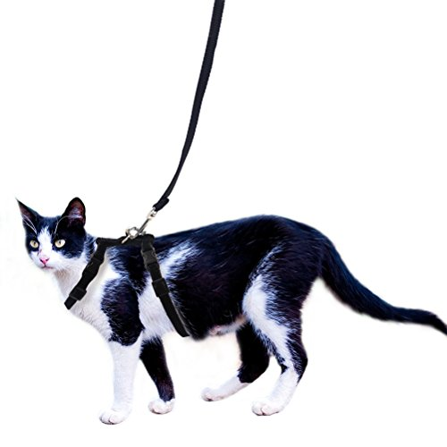 OFPUPPY Adjustable Cat Harness and Leash Set Velvet and Nylon Lead for Kitty Kitten Walking Black (Harness D-ring Cat)