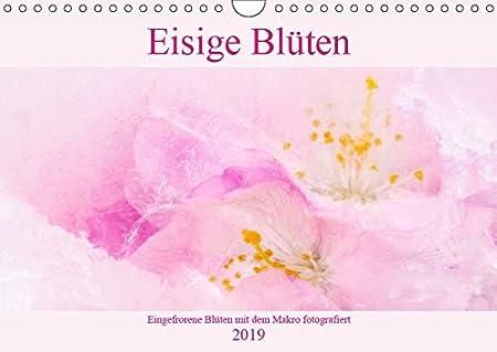 Eisige Blüten (Wandkalender 2019 DIN A4 quer): Makroaufnahmen von Blüten in einem Eisblock (Monatskalender, 14 Seiten ) (CALVENDO Kunst)