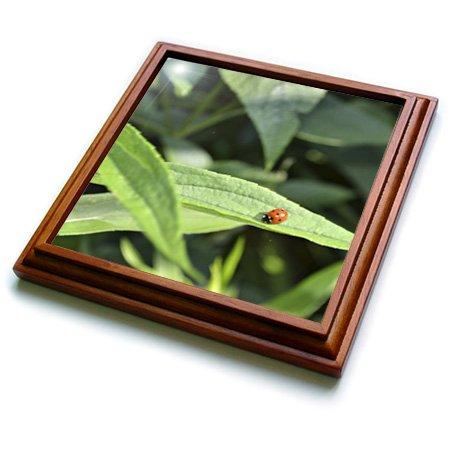 3dRose trv_53629_1 Ladybug Photo Trivet with Ceramic Tile, 8 by 8