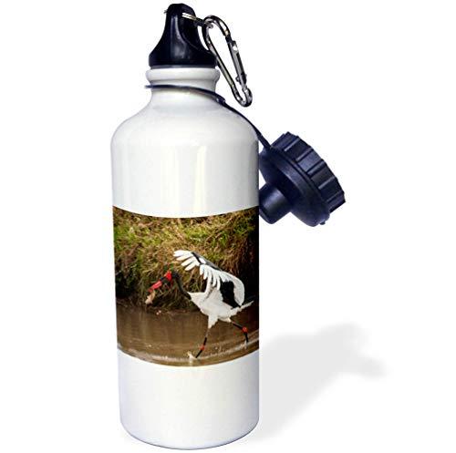 Stork Billed Saddle - 3dRose Danita Delimont - Storks - Kenya, Saddle-Billed Stork, with Fish - 21 oz Sports Water Bottle (wb_310437_1)