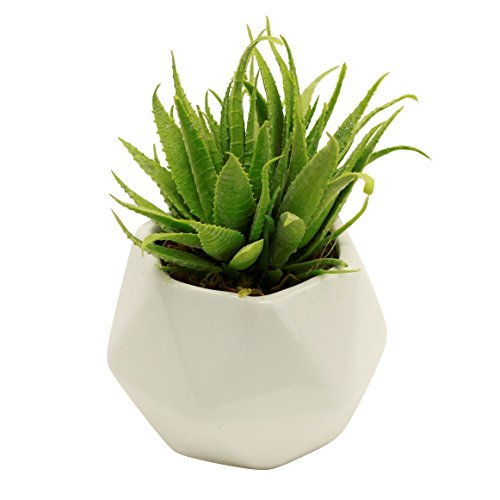 Small Faux Aloe Succulent in White Geometric Ceramic Planter - 4.5 x 6.5 Inches - Marmalade Floral Accents Potted Artificial Plant in Glazed Vase - Modern Decor for Home or Office (Accents Ceramic Vase)